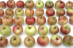 Stored apples royalty free stock photos