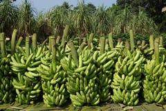 Stored bananas. Abstract Pattern of stored bananas   on a market in Gobindogonj Bangladesh Royalty Free Stock Photography