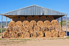 Stored cattle feed. Warehouse, barn with bales of hay grass stored in a symetrical pile stacked tot he roof Royalty Free Stock Image