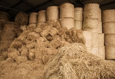Stored Hay For Animals royalty free stock photography