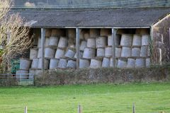 Stored hay bales, some 200 in this shed. Each bale seen is about  1.2 metres high and 1 metre across.  A lot of hay Royalty Free Stock Images