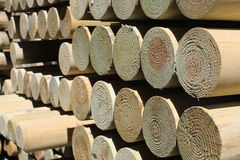 Stored pine timber poles stock images