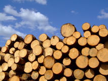 Stored timber Royalty Free Stock Photography