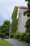 Storeyed дом 2 с плющом Стоковая Фотография