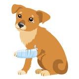 Storia triste del cane Illustrazione di vettore del cane o del cucciolo triste sveglio Cane malato con la gamba di immobilizzazio Fotografia Stock