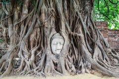 Storico ed antico la testa Buddha Immagini Stock