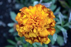 Storie colorate dal nostro giardino fotografia stock libera da diritti