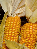 Storing corn in wooden crates Royalty Free Stock Photography