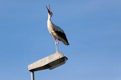 Stork 1 Stock Photos