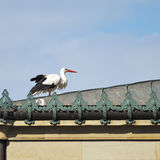 Stork. An image of a stork at the roof Stock Photography