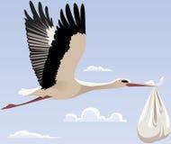 stork Royaltyfria Bilder