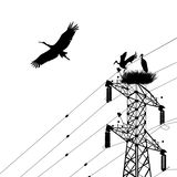 Stork. S silhouettes with electricity pole Royalty Free Stock Photography