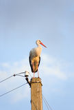 Stork. On a pillar over blue sky Royalty Free Stock Photography