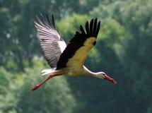 Free Stork Stock Photography - 17549792