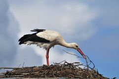 Stork. In the nest on top of the house Royalty Free Stock Photos