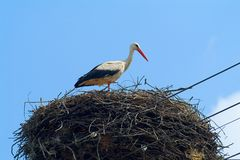 Stork. One stork bird on a nest and blue sky Royalty Free Stock Images