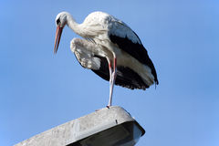 Stork 2 Stock Images