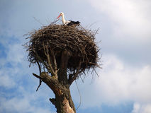 Stork 2 Stock Photography