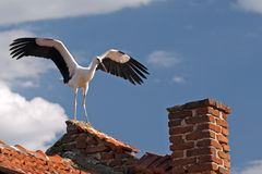 Stork. Starts flying from a house roof Royalty Free Stock Images