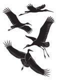 Stork vector illustration