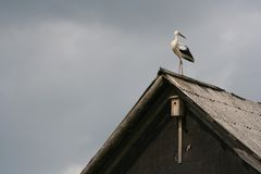 Stork. On a Roof stock photography