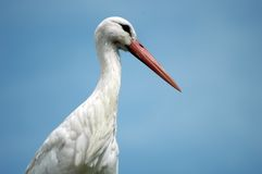 Stork. Against blue background Royalty Free Stock Photography