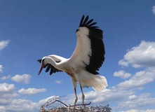 The stork stock photo