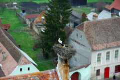Stork. A stork with a traditional village in the background royalty free stock photography