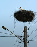 Stork. 's nest on the top of the post lamp Royalty Free Stock Images