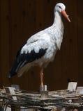 Stork. Beautiful bird stork Royalty Free Stock Photo