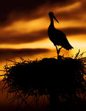 Stork. Siluette in the nest in sunset Royalty Free Stock Photography