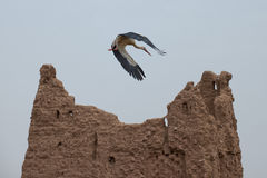 A stork on Ait Ben Haddou Stock Image