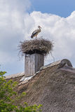 Stork alone on his nest Stock Photo