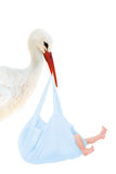 Stork with baby in blue bag. A stork carrying a baby in a blue bag Stock Photography
