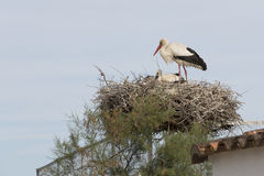 Stork with baby Royalty Free Stock Image