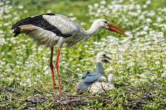 Stork with baby puppy on the daisy background Royalty Free Stock Images