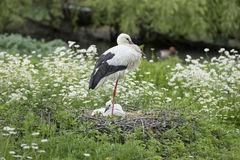 Stork with baby puppy in its nest. On the daisy background royalty free stock photography