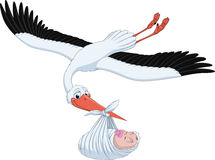 Stork and baby. Vector illustration, stork brings the baby in its beak, on a white background Stock Image