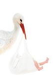 Stork with baby in white bag stock image