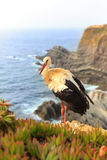 Stork on the beach Stock Photos
