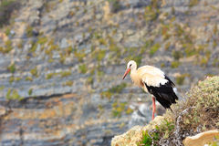 Stork on the beach Royalty Free Stock Photo