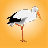 Stork. A beautiful white stork. Bird on one leg Royalty Free Stock Images