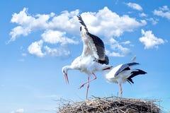 Stork, Bird, Animal, Fly Royalty Free Stock Image
