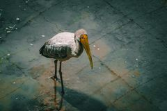 Stork. Bird, birdphotography, freshwaterbird, forest, animal stock image