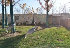 Stork bird Royalty Free Stock Photo