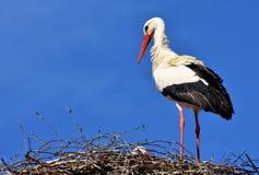 Stork, Bird, Fly, Plumage, Nature Stock Image