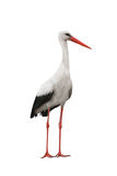 Stork. Bird isolated on white background royalty free stock photos