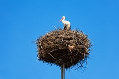 Stork bird's nest on column Stock Photos