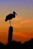 Stork bird and sunset Royalty Free Stock Image