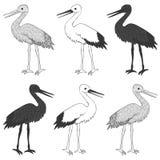 Stork bird vector set Stock Images